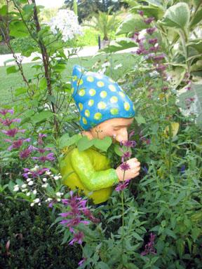 Jardines plantas y m s cosas la rama de oro p gina 2 for Enanos jardin