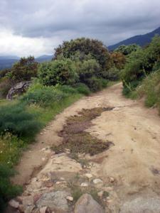 grieta con grama y tierra