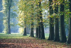 rangee_arbres_w650_h441