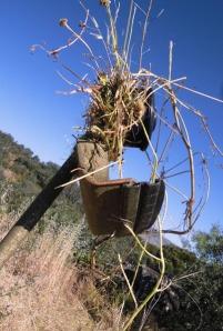 hierbas enredadas en el cabezal