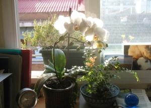 orquídea callejera 4-4-09