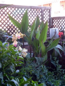 orquídeas,canna,etc
