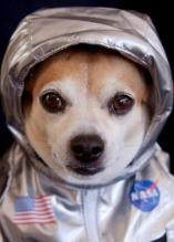 perro astronauta