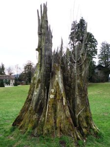 arbre à penthes