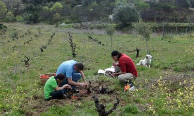 Javier, Miguel, y Pedro, que vino a ayudar