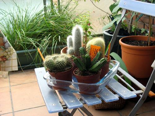 cómo se riegan los cactus