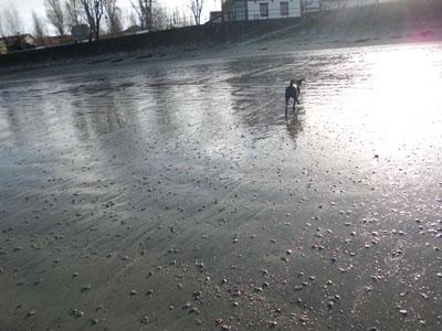 ceibe en la playa dic13