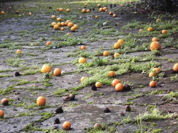naranjas rodando