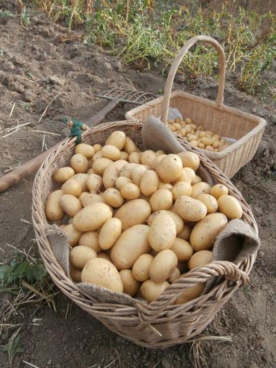 patatas Mona Lisa